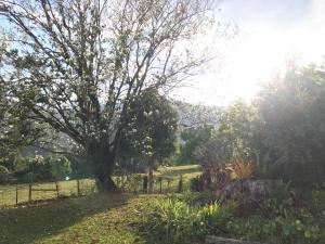 Sun streams into a peaceful garden in the country